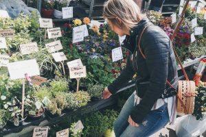 vogeltjesmarkt Antwerpen
